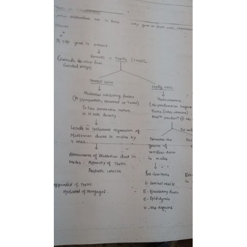 Obstetrics and Gynecology (P G ) Handwritten 2018 Notes by Sakshi Arora